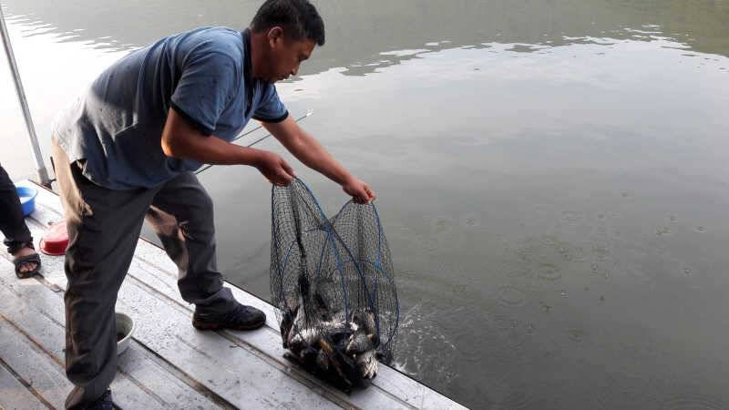 fish_pay_0100378.jpg