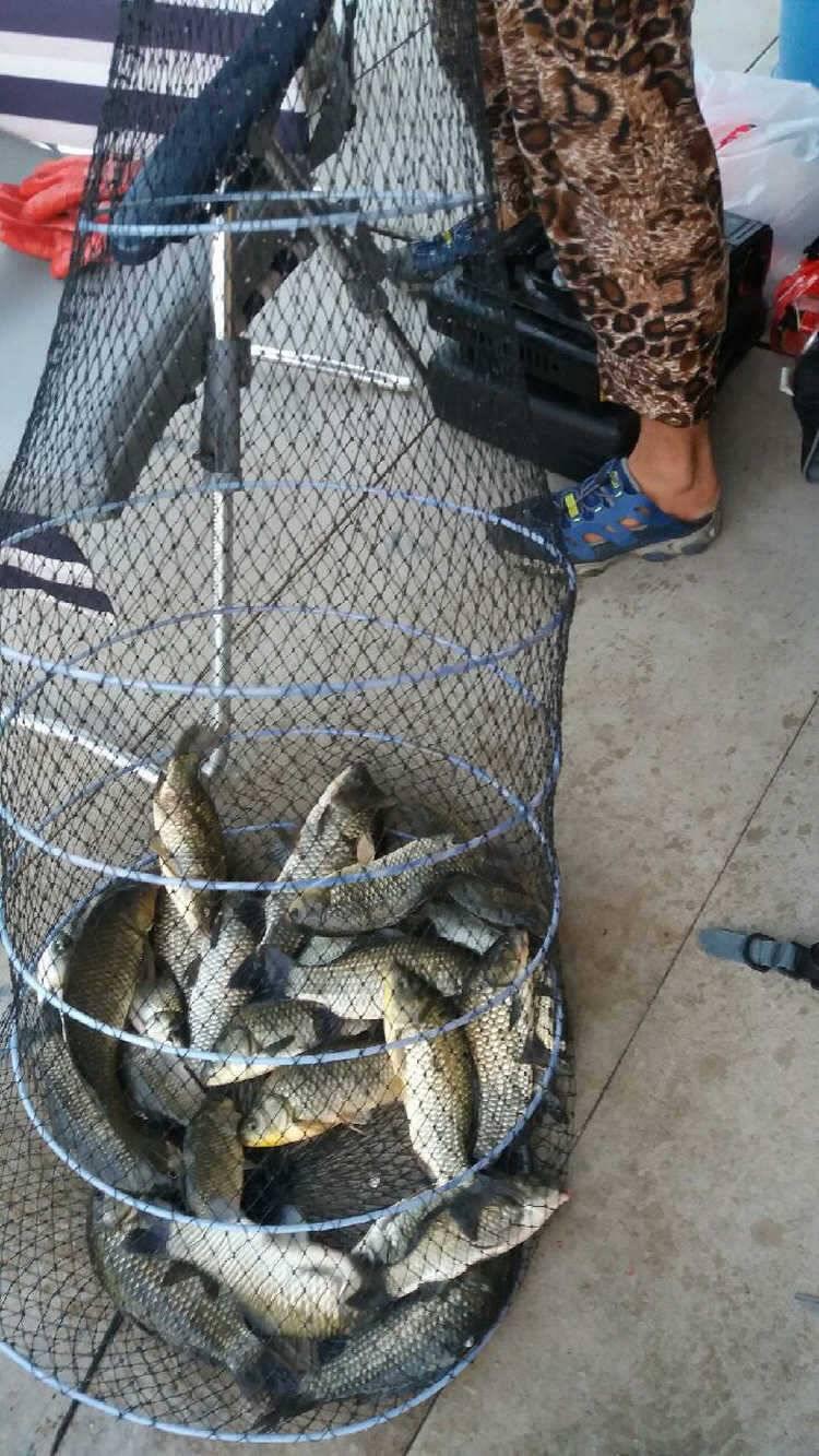fish_pay_01014075.jpg