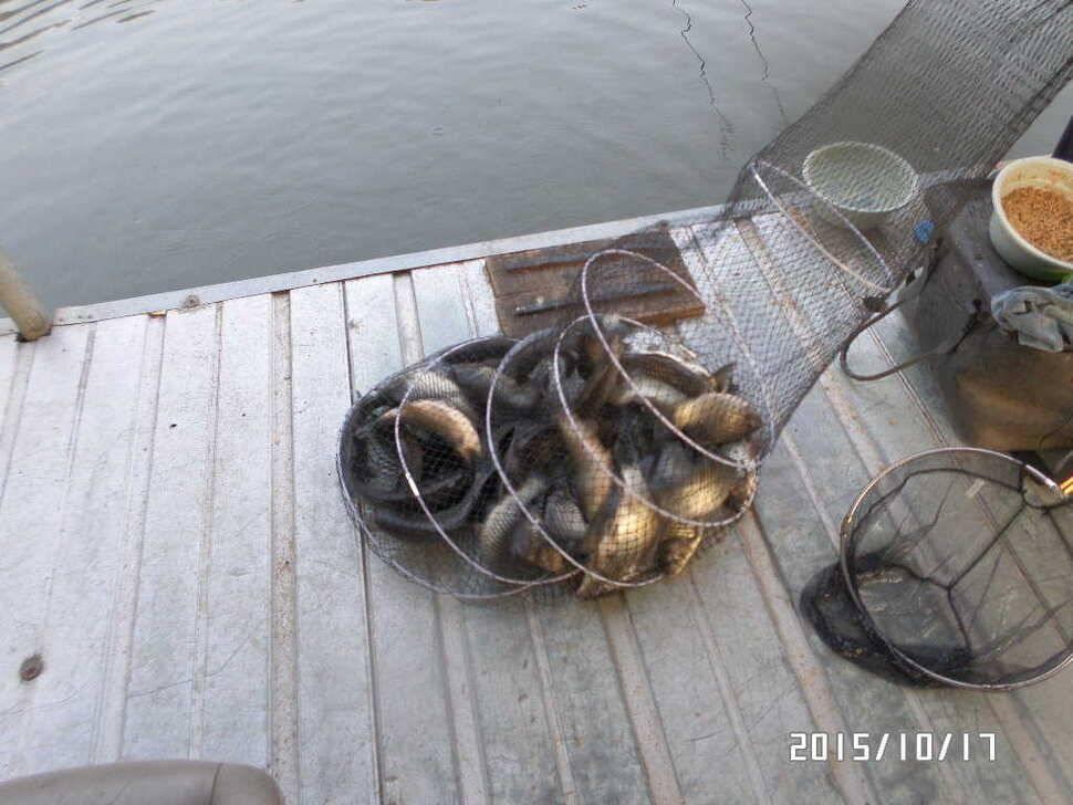 fish_pay_0157574.jpg