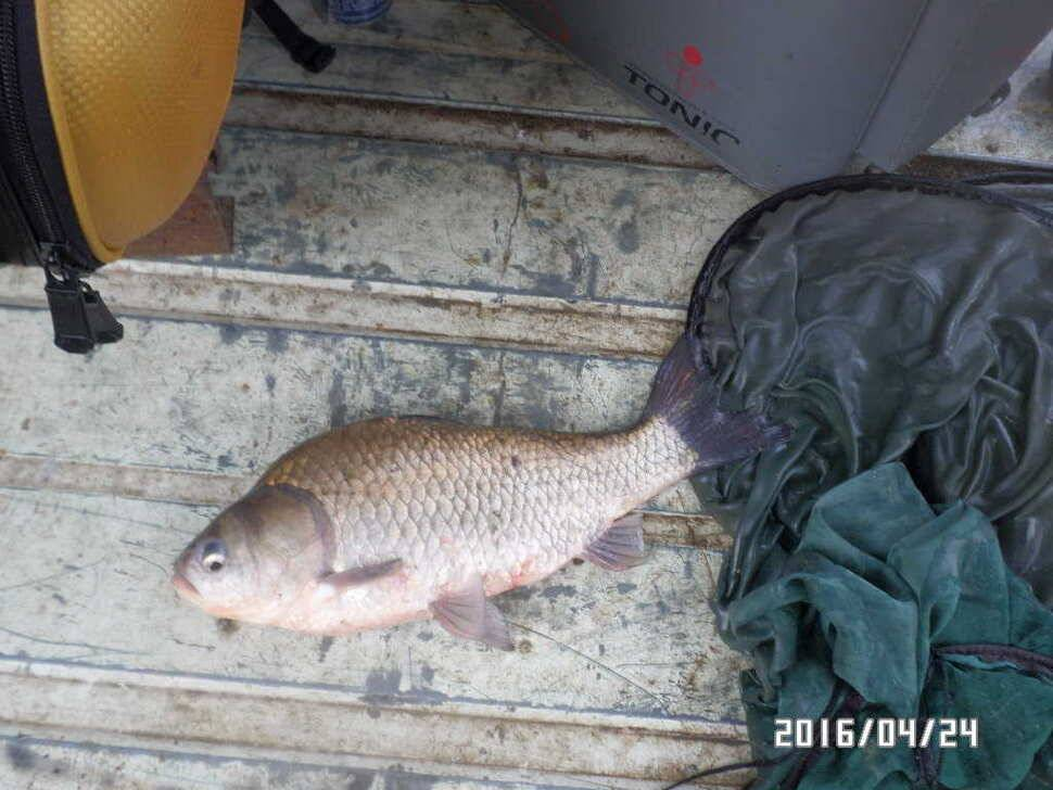 fish_pay_03220966.jpg