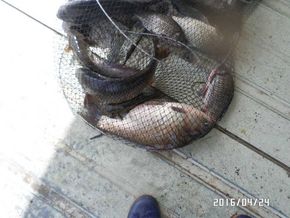 fish_pay_03222972.jpg