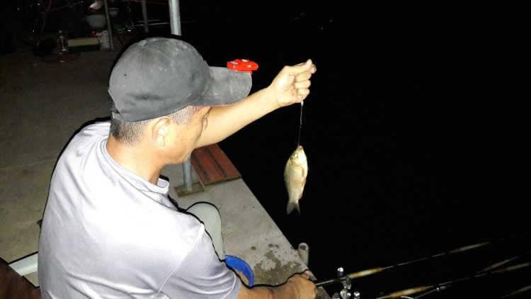 fish_pay_03260374.jpg