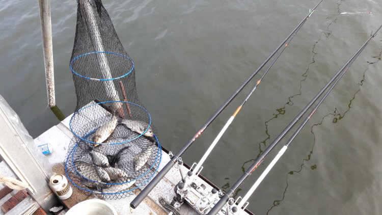 fish_pay_03272918.jpg