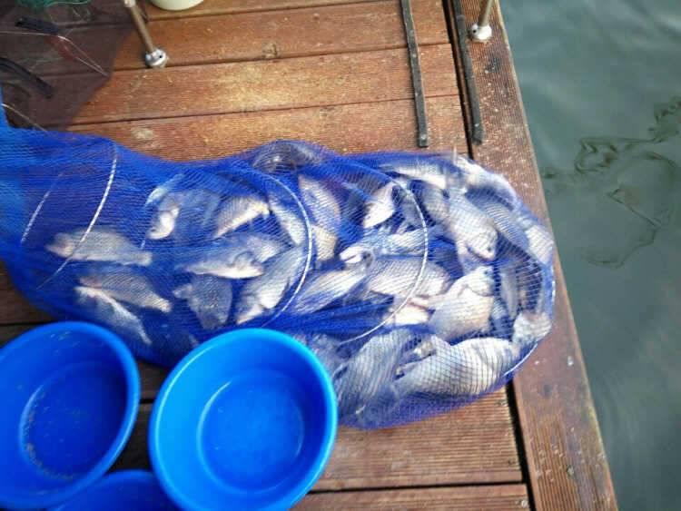 fish_pay_03280911.jpg