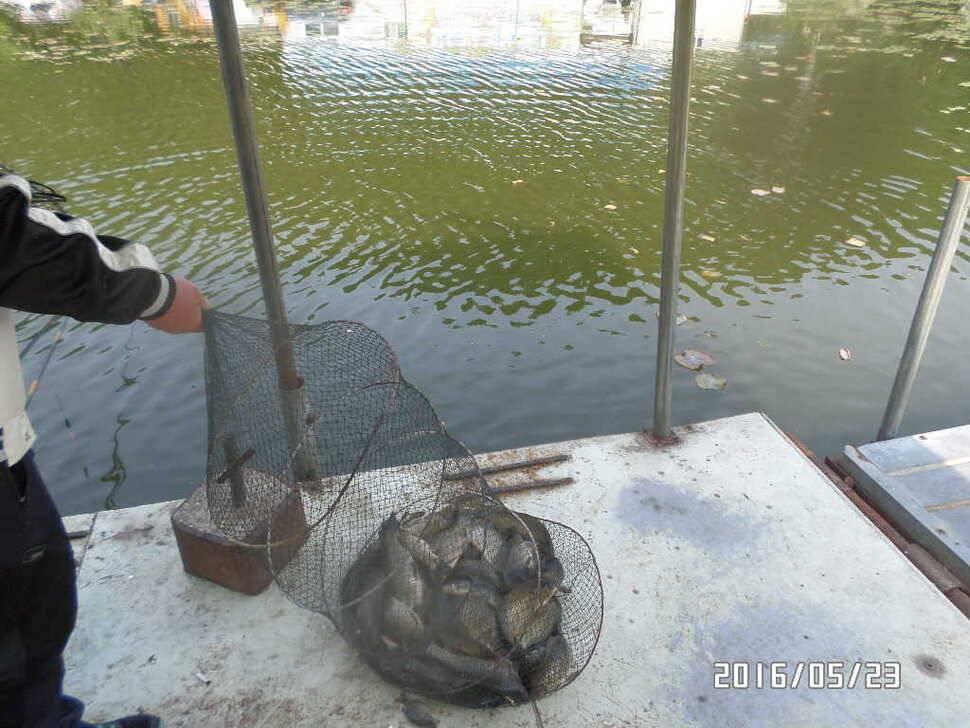 fish_pay_03350388.jpg