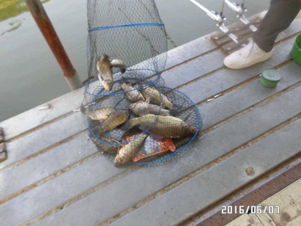 fish_pay_04373440.jpg