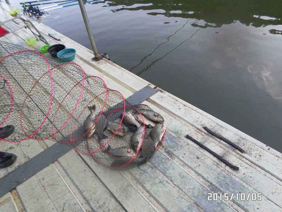 fish_pay_0541544.jpg