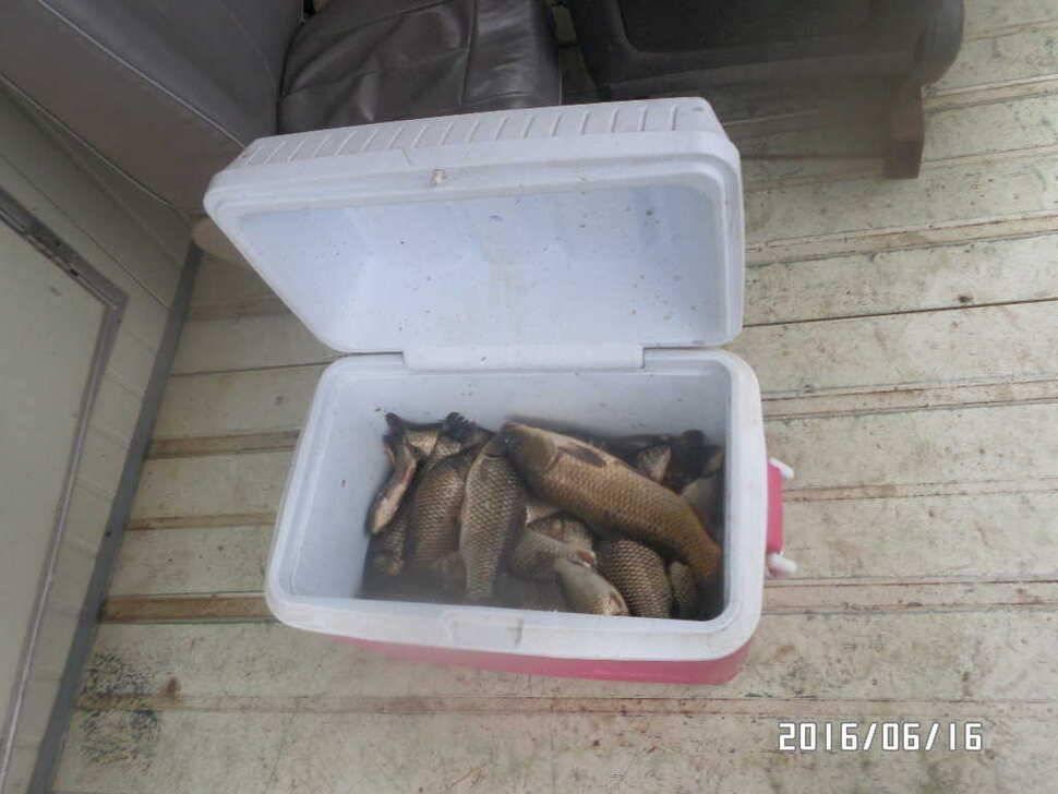 fish_pay_0601307.jpg