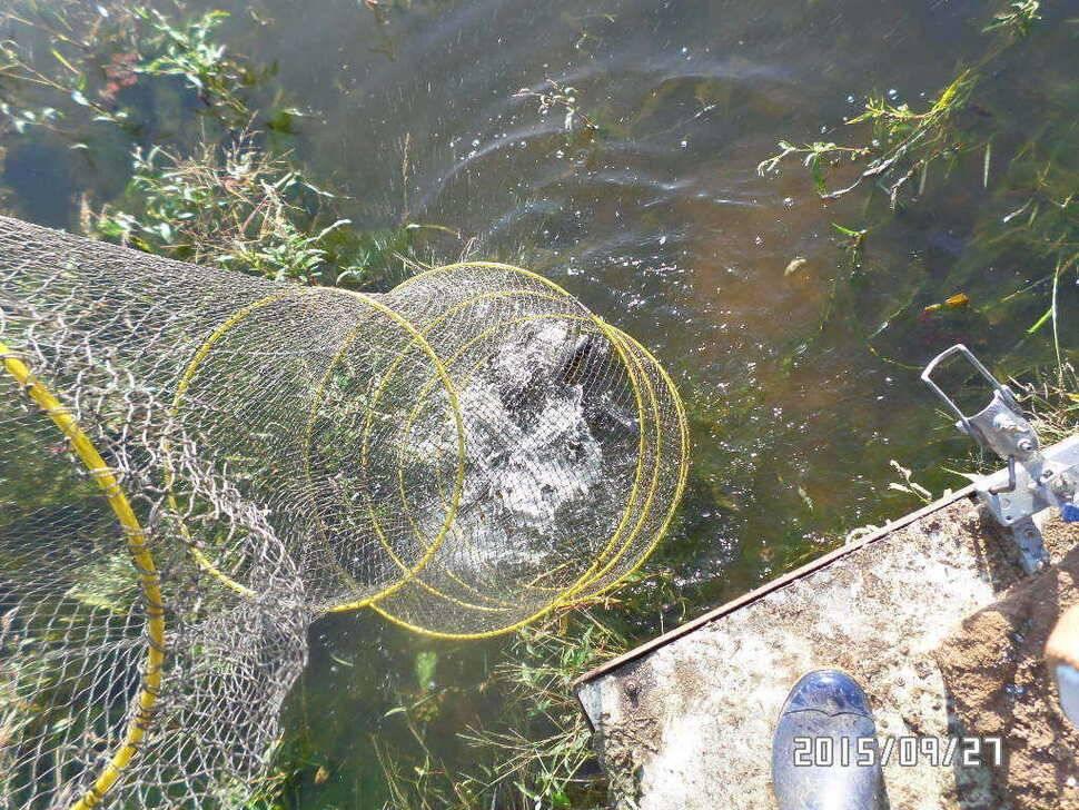 fish_pay_06073159.jpg