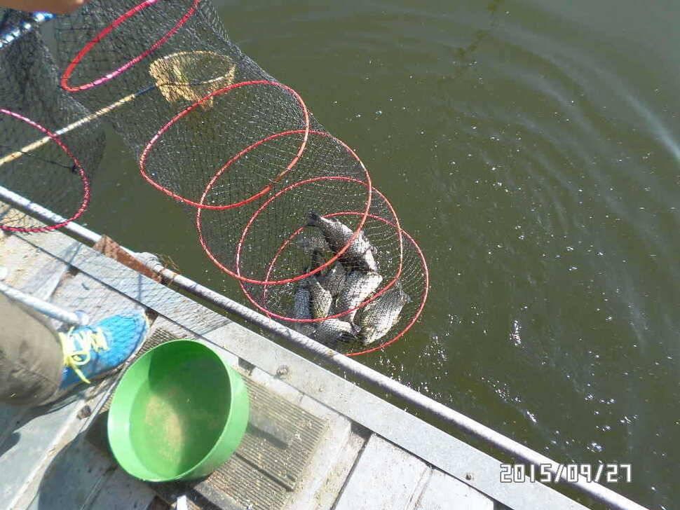 fish_pay_06075028.jpg