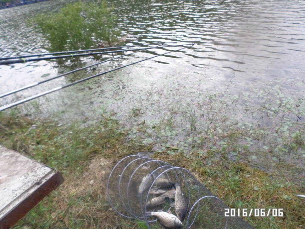 fish_pay_0611171.jpg
