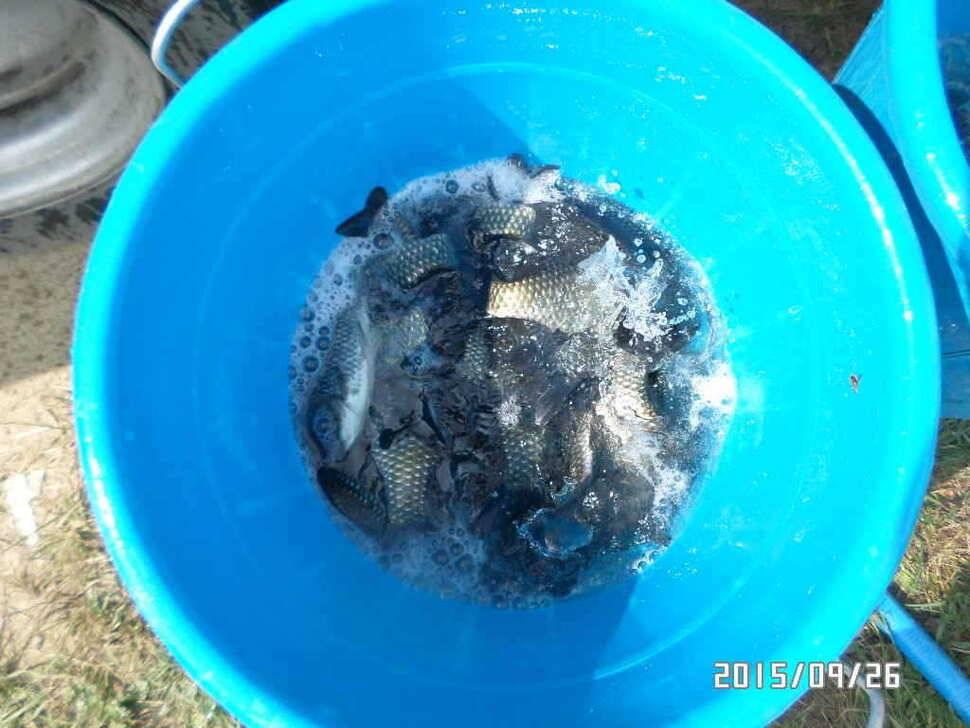 fish_pay_06154947.jpg