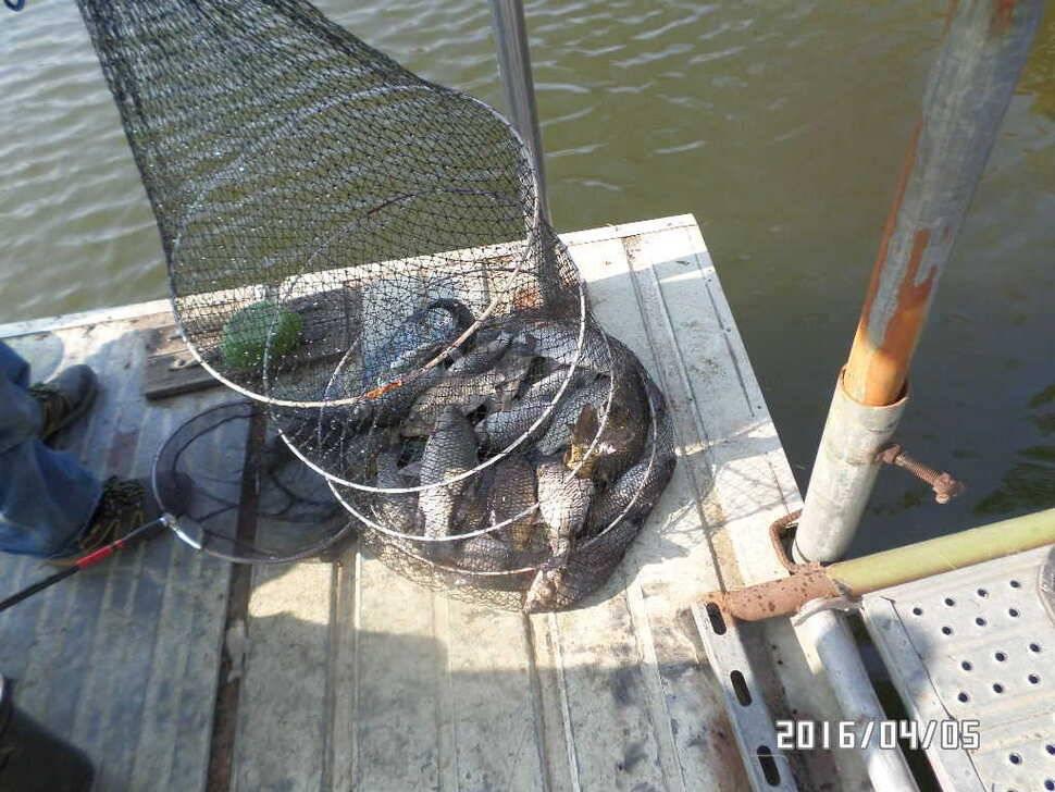 fish_pay_06415481.jpg