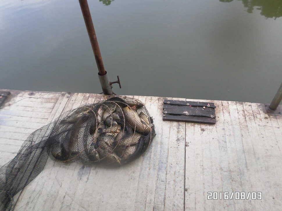 fish_pay_0653224.jpg