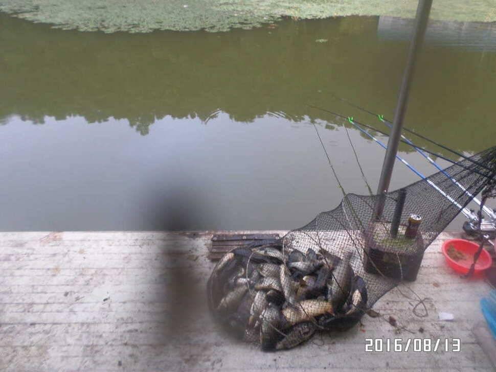 fish_pay_07044283.jpg