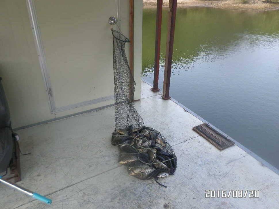 fish_pay_07111915.jpg