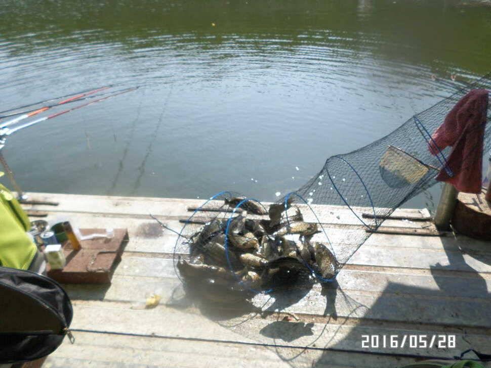 fish_pay_07365336.jpg
