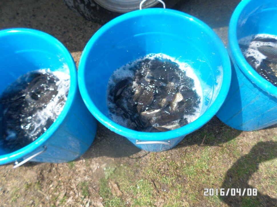 fish_pay_07534857.jpg