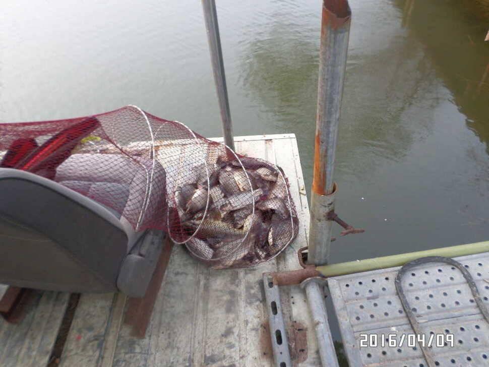 fish_pay_07551332.jpg