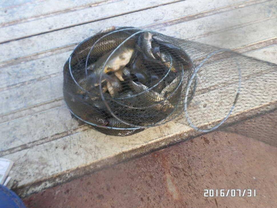 fish_pay_08012641.jpg