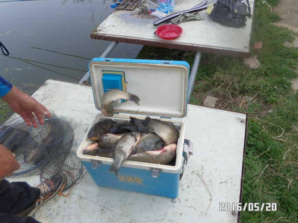 fish_pay_08093226.jpg