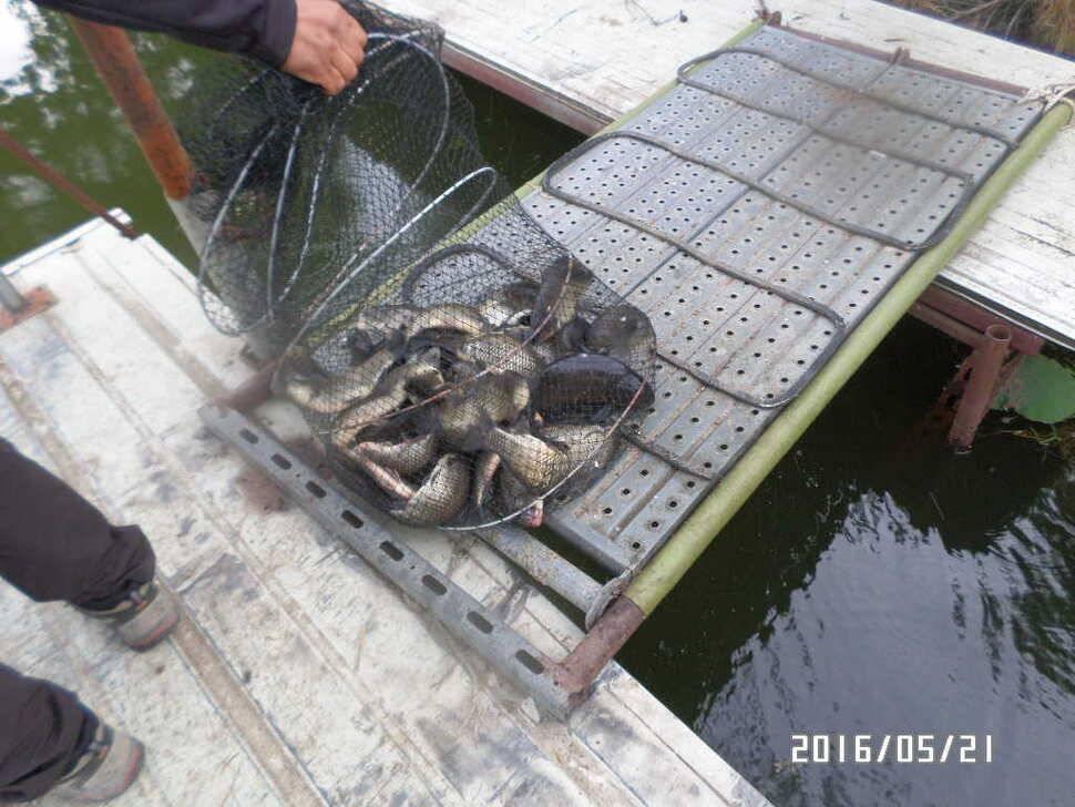 fish_pay_0809479.jpg