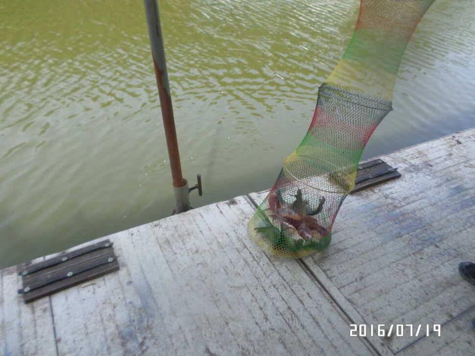 fish_pay_08151092.jpg