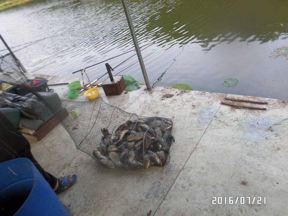 fish_pay_08155516.jpg