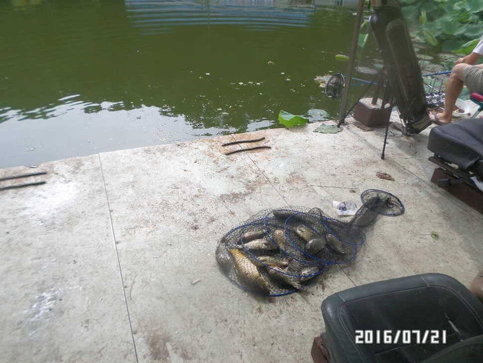 fish_pay_08163929.jpg