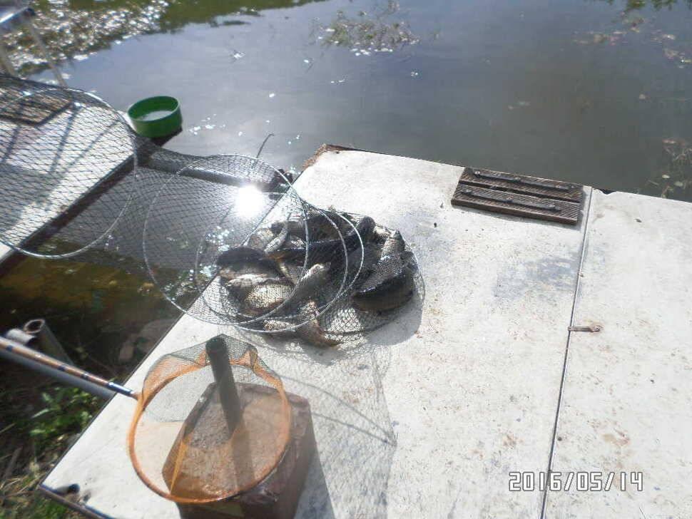 fish_pay_08173198.jpg