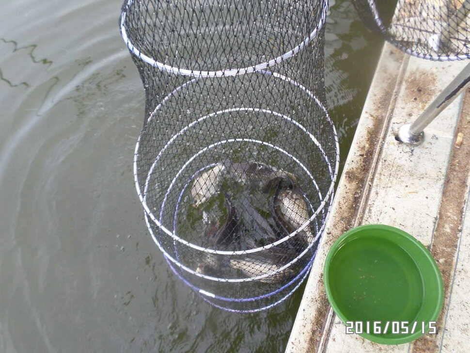fish_pay_08182792.jpg