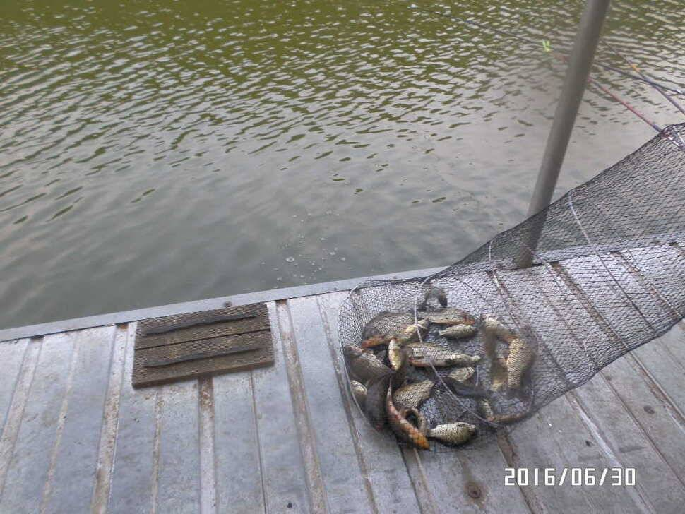 fish_pay_081917100.jpg