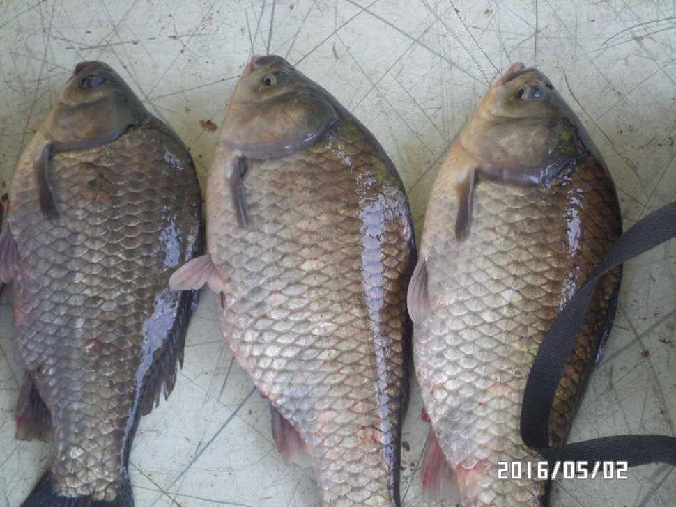 fish_pay_08333641.jpg