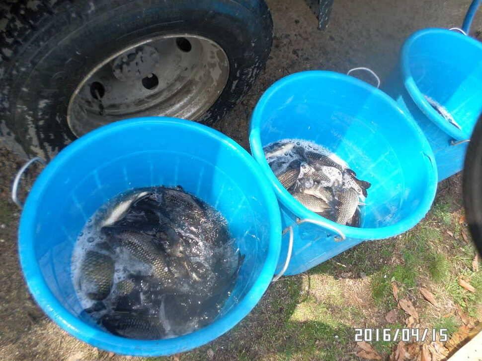 fish_pay_08404181.jpg