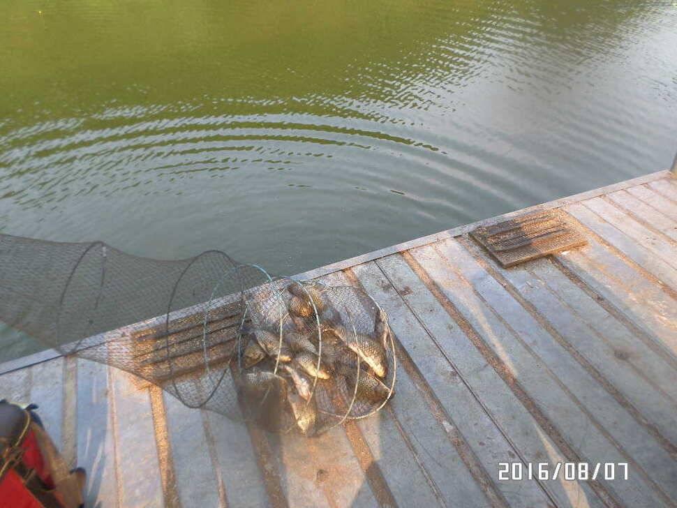 fish_pay_0841058.jpg