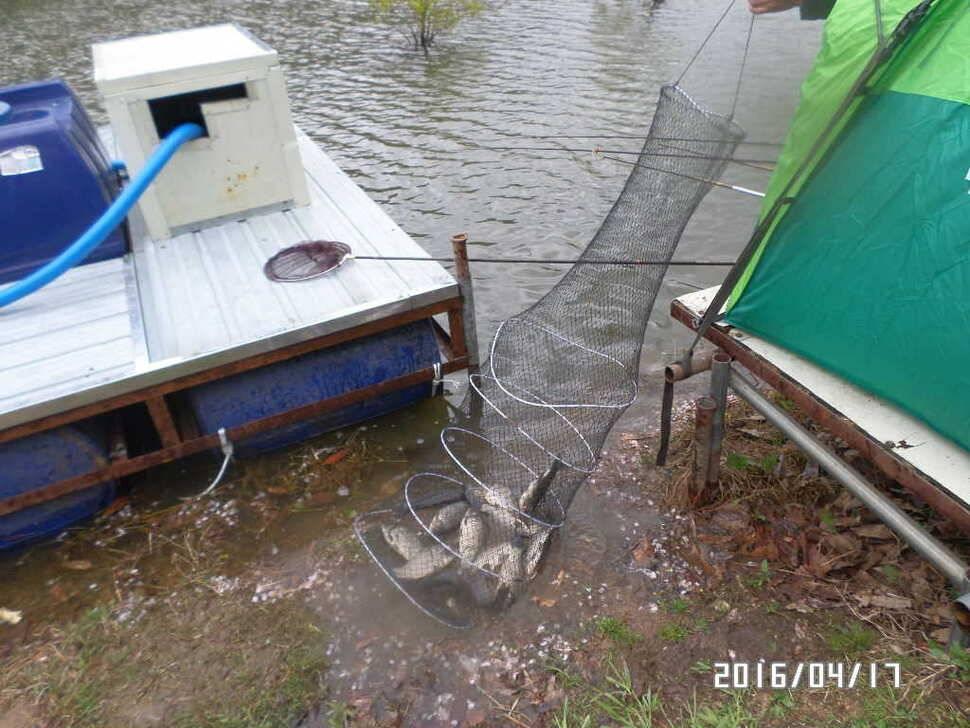 fish_pay_08420432.jpg