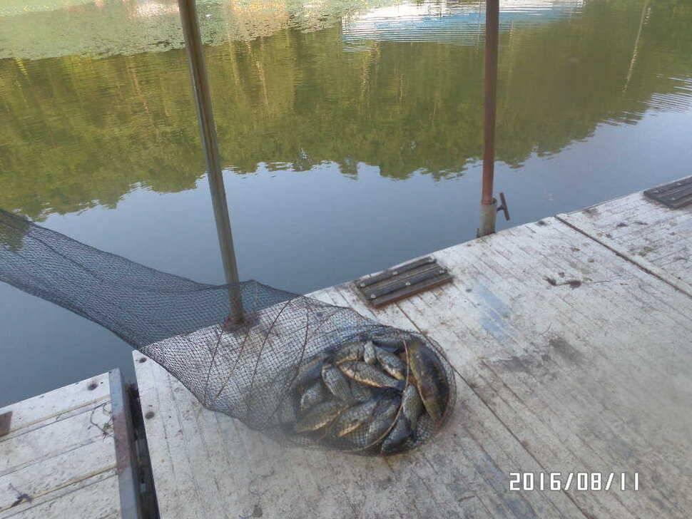 fish_pay_08420947.jpg