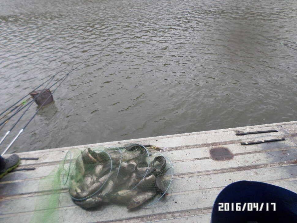 fish_pay_08421359.jpg