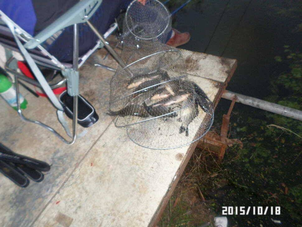 fish_pay_08463595.jpg