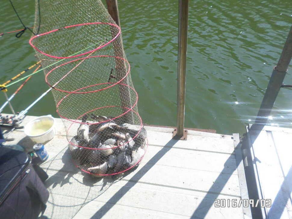 fish_pay_08591699.jpg
