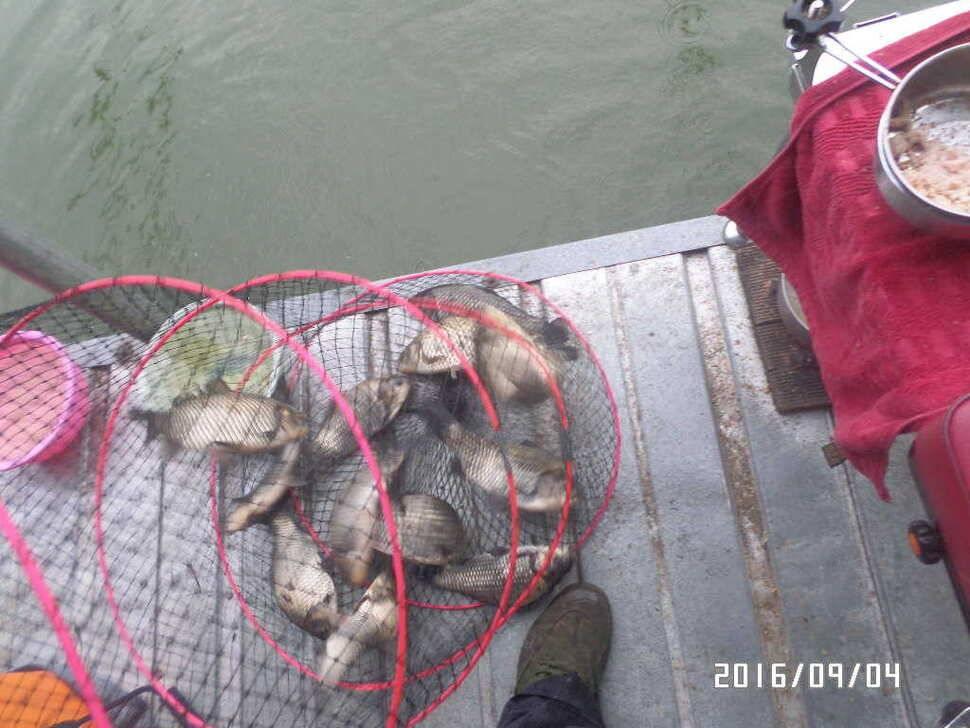 fish_pay_09003219.jpg