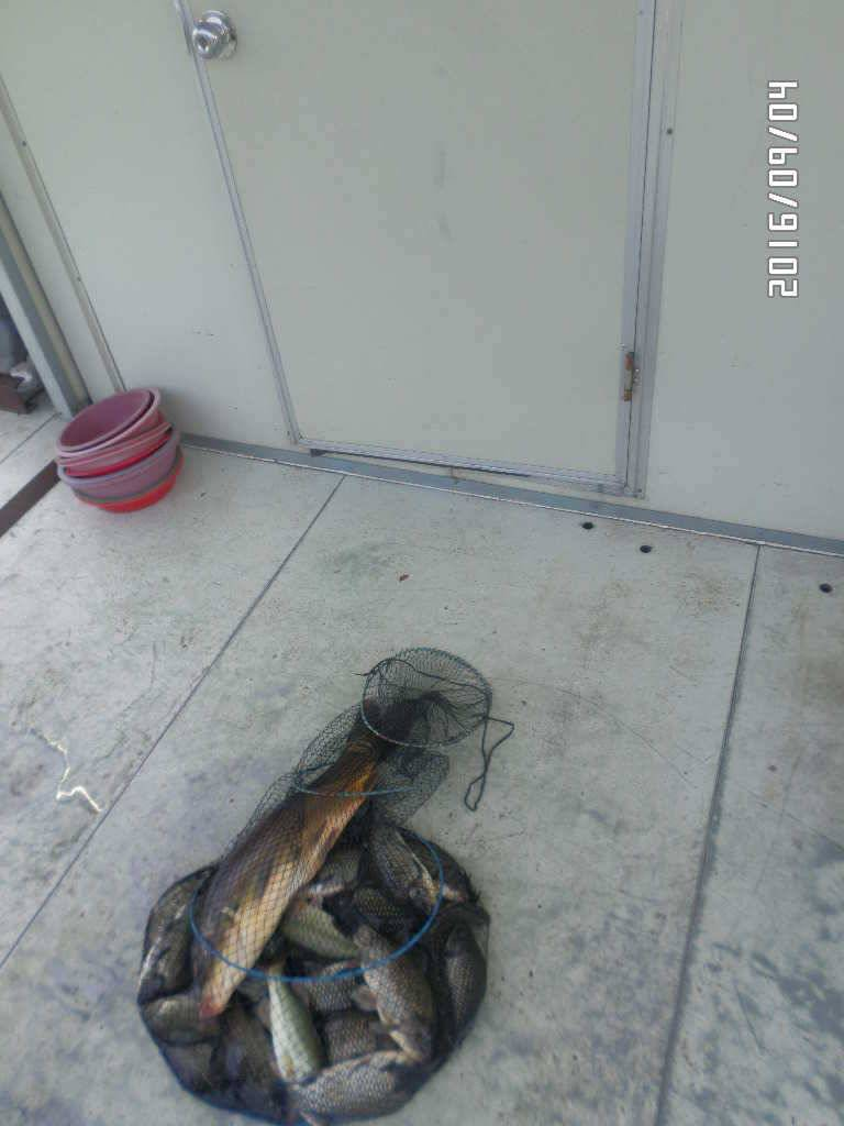 fish_pay_09010945.jpg