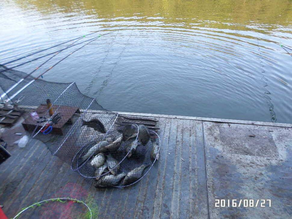 fish_pay_09064951.jpg
