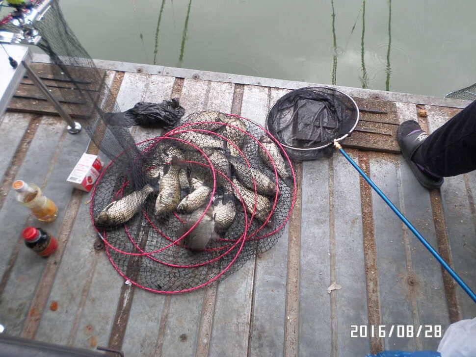 fish_pay_0907511.jpg