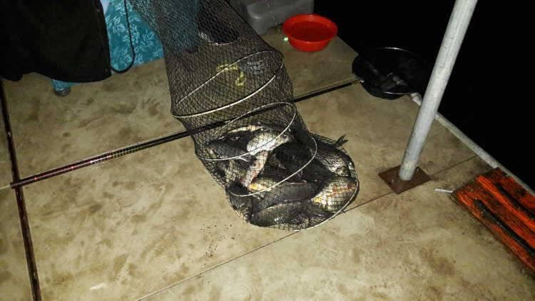 fish_pay_09150352.jpg