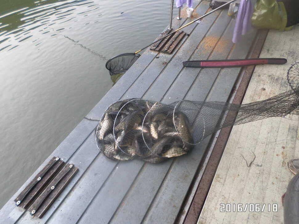 fish_pay_09531961.jpg