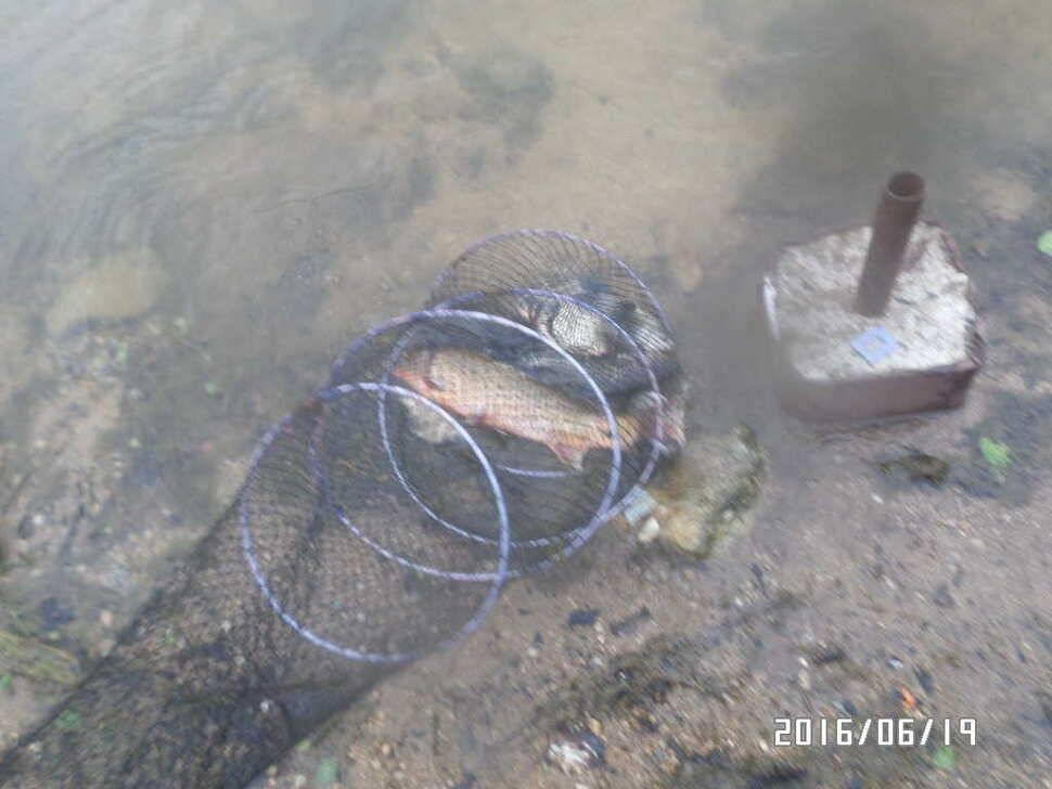 fish_pay_0954194.jpg