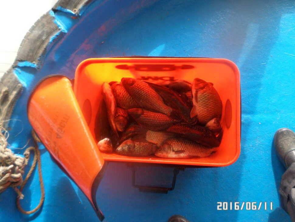 fish_pay_10160798.jpg