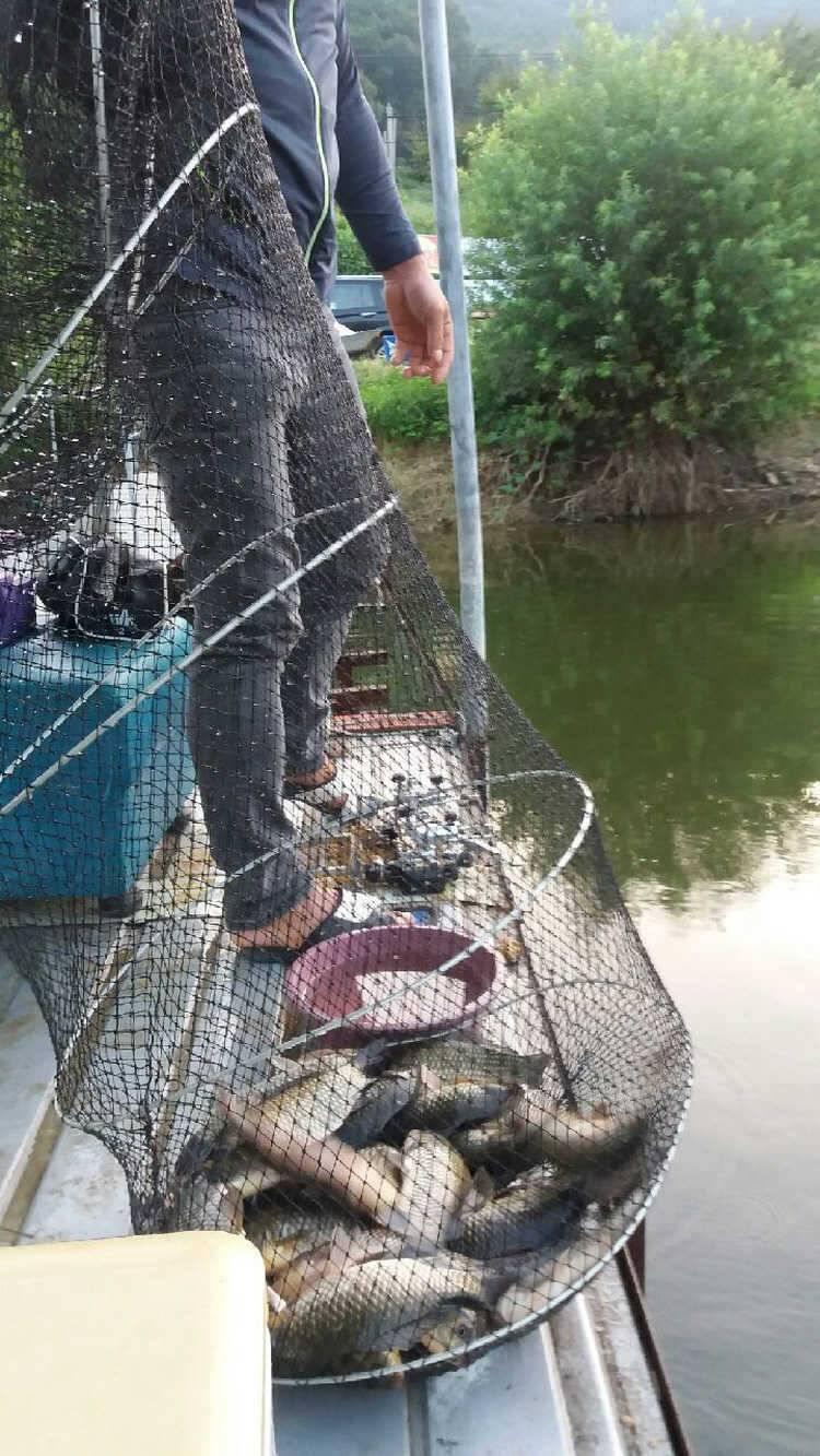 fish_pay_10164517.jpg