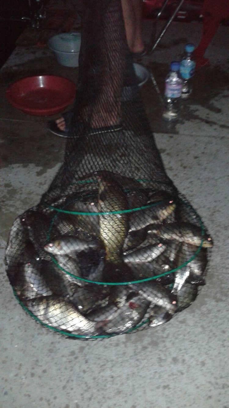 fish_pay_10164916.jpg